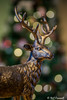 1/365 2018 Bokeh (crezzy1976) Tags: nikon d3300 nikkor40mm indoor 365 365challenge2018 2018 1365 day1 bokeh stag lights photographybyneilcresswell photoaday crezzy1976 hmm macromonday