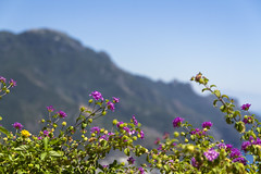 A place in the sun (A blond-Tess) Tags: mountain italy amalficoast sunny flowers bluesky canonphotography holiday ravello italianholiday bokeh shallowdof foregroundfocus europe plants outdoors