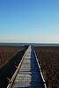 Lydd on Sea (richwat2011) Tags: octnovdec17 kent seaside sea seascape englishchannel coast coastline shore shoreline lade lyddonsea southcoast beach shingle nikon d200 18200mmvr boardwalk