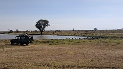 2017-12-28 15.23.43 (dcwpugh) Tags: travel nairobi kenya safari nairobinationalpark