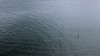 The man and his board (JuliSonne) Tags: minimalism water sea ocean surfer surfboard
