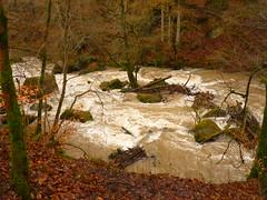 Felsinseln bei Hochwasser (Jörg Paul Kaspari) Tags: irrel irrelerwasserfälle river wild fluss gewässer prüm naturpark südeifel eifel hochwasser