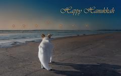 Happy Hanukkah (utski7) Tags: studio26 nadja holidays dec2017 assignment beachstars menorah chanukkah hannukah hanukkah beach star sea water blue gold december