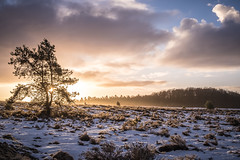 Winterse hei in de ochtendzon (Jan-Willem Adams) Tags: adamsphotography clouds fordjw gelderland heath hei landscape landschap nature natuur nederland netherlands sneeuw winter wolken zonsopkomst ochtend