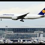 B777-FBT | Lufthansa Cargo | D-ALFD | FRA thumbnail