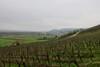 Vignoble de Remich et vallée de la Moselle (godran25) Tags: europe luxembourg luxemburg remich reimech moselle musel vin vineyards vignes vignoble vig