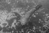 DSC00810 (scubaseb) Tags: seals montague island australia diving