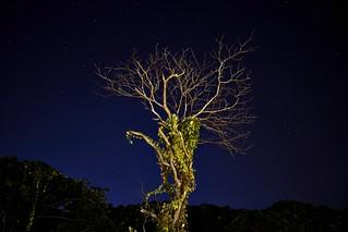 El árbol | The tree