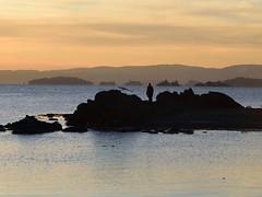 Man and bird at Bygdøy (jonarnefoss2013) Tags: nikond750 solnedgang sunser bygdøy huk oslofjord oslo