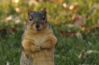 Squirrel, Morton Arboretum. 418 (EOS)