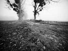 Campagne picarde II (steph20_2) Tags: panasonic gh3 714 m43 lumix campagne countryside picardie oise france monochrome monochrom brouillard noir noiretblanc ngc blanc black bw white skanchelli