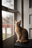 Edit -1 (Dane Van) Tags: cat canon 5d 50mm18ii karl kitten