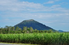 Sugar cane farms, Mount Marlow, near  Proserpine, Nth Qld. (AndyBrii) Tags: queensland north bowen airliebeach whitsundays greatbarrierreef