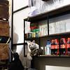 Hanoi (monsieur ours) Tags: vietnam chat cat étagère shelf animal bar