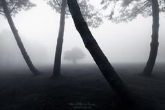 Jailed (Mimadeo) Tags: tree trees trunk forest fog silhouette branch foggy haze hazy landscape leaf light mist misty mysterious mystery morning blackandwhite black white monochrome moody