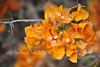 Wishing you (David Lev) Tags: nirim mygarden shrubs bougainvillea