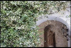 NO8DO (Nrbelex) Tags: canon dslr 5dmkiii nrbelex ef2470mm 2470mmf28 2470mm 2470mml 5diii widegamut adobergb argb widecolorspace spain seville sevilla no8do realalcázardesevilla alcázarofseville plants flowers dof lamp arch statue
