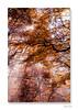 Mémoires d'automne ... (jeremie.brion) Tags: automne nature paysage bois forêt feuille arbres arbre