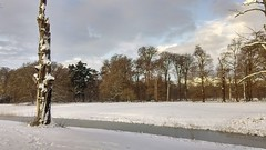 Winter. Taken with my phone.