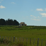 The green fields of New Zealand II thumbnail