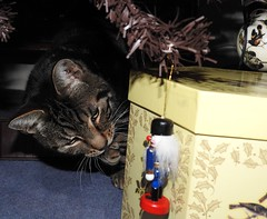 Grrr!! I WILL NIBBLE YOU! (P❀ppy) Tags: harry ap poppy poppycocqué video quote quotation christmas cat feline decoration nutcrackersoldier indoors mycat amusing funny comical poem poetry prose andrewmiller meettigger thatspecialkindoflove p❀ppy