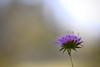 Bring back summertime. (picsulove) Tags: sommer summer flow flower blume blühen spring colors nature