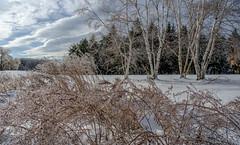 (jtr27) Tags: dscf4970xl jtr27 fuji fujifilm xt20 trans rokinon samyang 16mm f2 f20 wideangle landscape ice storm newengland maine
