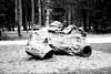 Once A Tree (SSnapDragon) Tags: log stump section bw blackandwhite dark bright contrast plant