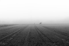 Nebelreiter (st.weber71) Tags: nikon nrw niederrhein natur nebel feld felder deutschland d850 pferde landschaft landscape monochrom melancholie tiere germany trist schwarzweis blackandwhite art outdoor land