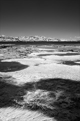 flinders-1235-ps-w (pw-pix) Tags: water beach sand rocks rocky rockpools weed seaweed sunny warm summer trees dunes cliffs weeds wet damp lowtide shore bw blackandwhite monochrome sonya7 irconvertedsonya7 850nminfrared ir infrared nearflinderspier flindersbeach flinders westernport morningtonpeninsula shireofmornington victoria australia peterwilliams pwpix wwwpwpixstudio pwpixstudio