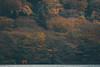 蘆之湖|箱根 (里卡豆) Tags: ashigarashimogun kanagawaken 日本 jp tōkyōto olympus em10markiii japan kanto 楓葉 紅葉 mapple tachikawashi 40150mm f28 pro olympus40150mmf28pro 蘆之湖 箱根