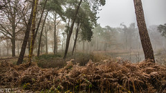 Koud en mistig/Cold and foggy (truus1949) Tags: wandelen kapellerput winter landschap varens bomen natuur