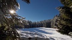 Inverno in Cansiglio (Fernando De March) Tags: cansiglio inverno freddo gelo inversione termica