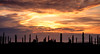 Like waiting for a bus (ajecaldwell11) Tags: 2018 sunrise ankh water celestialcompass light tide newzealand napier silhouette waiting newyear sky dawn hawkesbay caldwell ateaarangi clouds
