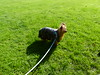 Watching (FloraandFauna_2) Tags: missie dog pet yorkie grasshutton in the forest penrith cumbria