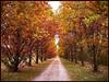 Allee (almresi1) Tags: herbst autumn fall bäume trees allee weg way nature landschaft landscape lujdwigsburg