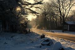 Sunny afternoon (In Explore) (Steenjep) Tags: vinter winter jylland danmark denmark sne snow vej road sun sol skygge shadow light lys dollerup