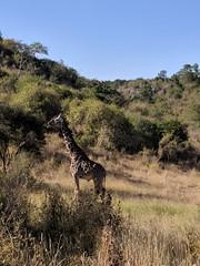 2017-12-28 16.46.45 (dcwpugh) Tags: travel nairobi kenya safari nairobinationalpark