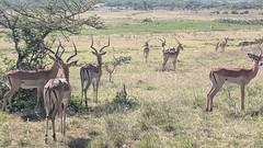 2017-12-28 15.24.41 (dcwpugh) Tags: travel nairobi kenya safari nairobinationalpark