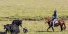 Herders in action - Grasslands of Sichuan & Qinghai (Pic_Joy) Tags: sichuan qinghai china asia grassland 四川 青海 草原 高原 中国 亚洲 春天