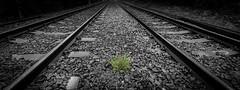 Green line (paullangton) Tags: monochrome blackandwhite green rail railway nature canon grass stone train weed lines track wide bw metal