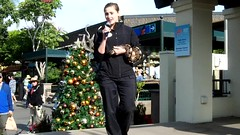 San Diego Zoo: Introducing Charger, the African Ball Python (lhboudreau) Tags: sandiegozoo outdoor outdoors california animals zoo animal sandiego video videos snake viper reptile python africanballpython charger stage zookeeper animalencounter frontstreetstage animalambassador introduction royalpython gold brown blotches ballpython constrictor docile african nonvenomous meeting tongue hugs hugging holiday christmastree