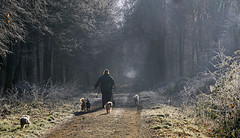 Winterspaziergang (karinrogmann) Tags: winter spaziergang wald walk forest passeggiata invernale foresta
