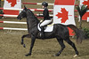 Emily and New Boy De Logerie (Megakillerwhales) Tags: megakillerwales horse horses equine equestrian show barn stall eventing royal royalhorseshow royalwinterfair dressage hunterjumping agriculture cow cows rder riders equiestrian englishpleasure englishriding western westernriding racing barrel breyer breyers breyerfest breyerhorse breyermodel horsephotography animal animals animalcloseups animalphotography wildlife wildlifephotography planet earth nature world sand nikon nikond3400 zookeeper zoo zebra zebras przewalski'shorse 2017 canada fall clydesdale clydesdales shire shires cavalia odessy showjumping jumping models bbcearth bbcnature animalplanet discoverychannel disneynature nationalgeaographic photography photo thoroughbred