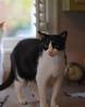 Idaho (rootcrop54) Tags: idaho male tuxedo oddeyed oddeyes heterochromia kitchen counter color neko macska kedi 猫 kočka kissa γάτα köttur kucing gatto 고양이 kaķis katė katt katze katzen kot кошка mačka gatos maček kitteh chat ネコ