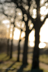 DSC_2043 (Birdiebirdbrain) Tags: nature naturephotography naturfoto natur plant plants winter frost rimfrost fredericia fredericiaramparts fredericiavold danmark denmark bokeh macro morninglight vinter nikon nikond3300 tokina tokina100mmf28 trees abstract outoffocus