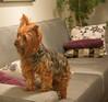 Minie - Sao Paulo/SP - Brasil (Gilberto Russo) Tags: gilbertorusso saopaulo sp brasil brazil minie dog cachorro
