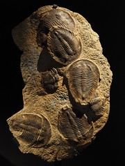 Trilobites (M_Strasser) Tags: trilobites olympus olympusomdem1 lyon