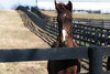 Horse in paddock (sniggie) Tags: kentucky versailles bluegrass horse thoroughbred