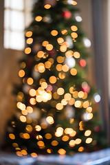 Christmas Tree Bokeh (Chase Hoffman) Tags: colorado color chasehoffman denver chasehoffmanphotography normal cute winter depthoffield dof fujifilm fujifilmxt10 fuji fujinonxf56mmf12r bokeh shallowdof shallowdepthoffield christmas christmastree lights